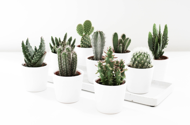 noa-noir-art-interior-home-decor-cactus-cacti-succulents-green-mini-plants-minimalistic-2