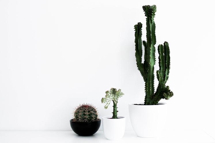 noa-noir-art-plants-cacti-cactus-succulents-minimal-interior-design-1