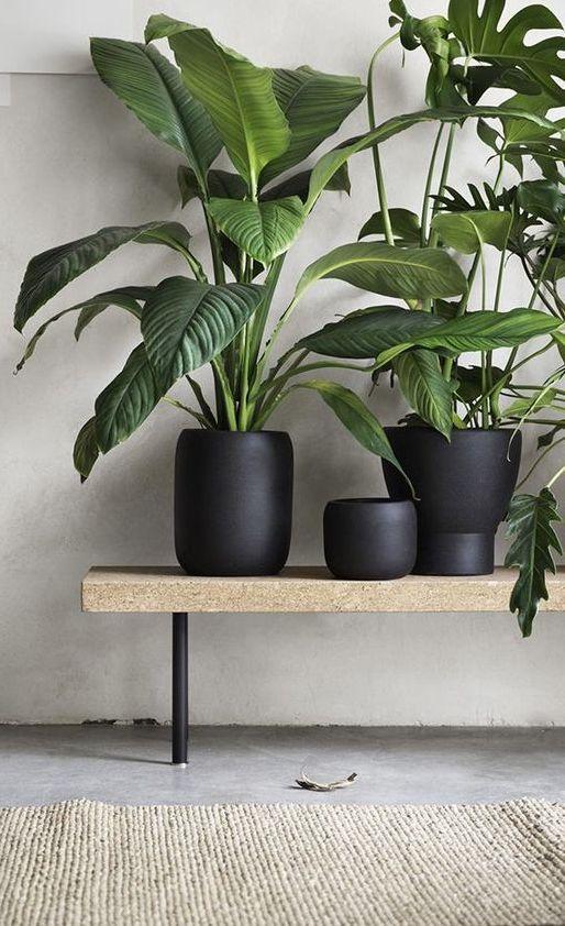 08 Biljke